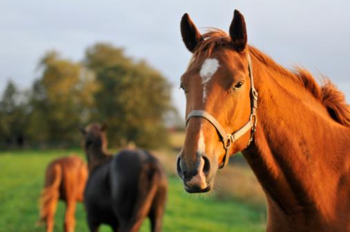 Zootecnia, alimenti per la cura dei vostri animali